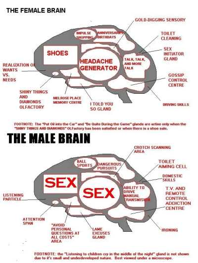 A jokey take on brain differences between men and women
